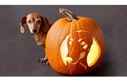 Как вырезать тыкву на Хэллоуин?